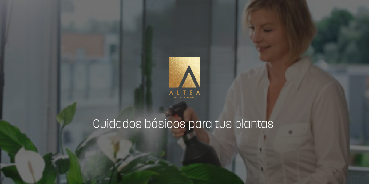 fertilizar-plantas-interior